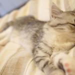 熱帯夜でも快眠!ひんやり「ラディクールパジャマ」