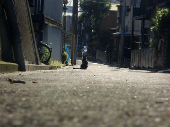 主人の帰りを待つ猫