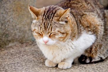 うたた寝する猫