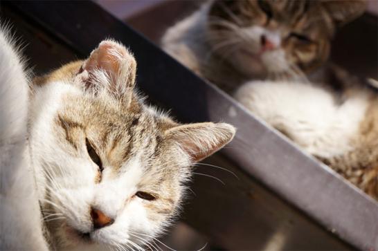 こっちを見ている猫