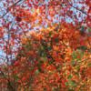 滋賀の穴場紅葉スポット「近江孤篷庵」に行ってみた