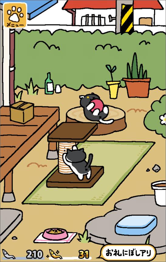 猫が集まってきました