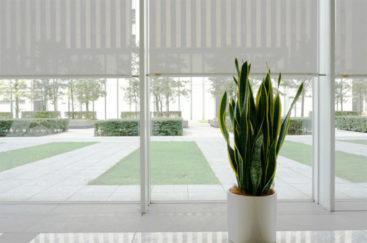 オフィスの植物