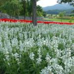 静かな英国風庭園「ゆにガーデン」で北海道の広大な花畑を鑑賞