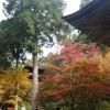 滋賀の湖東三山「金剛輪寺」で登山気分で紅葉散策
