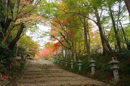 胡宮神社表参道の紅葉
