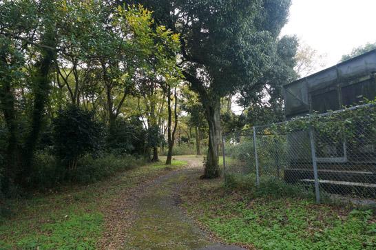 胡宮神社へ続く山道
