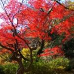 駒込の六義園、東京とは思えない美しい庭園で紅葉散策