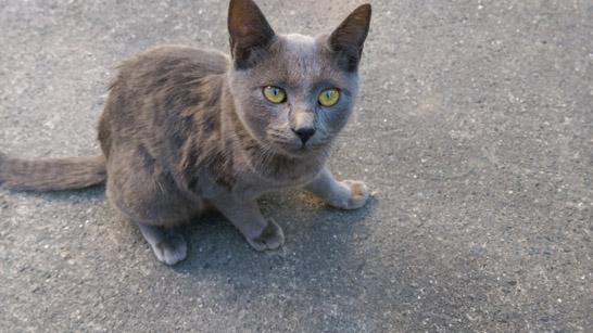 cat-translate3