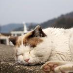 滋賀の離島、琵琶湖にある沖島観光。猫島とも呼ばれる島を散歩
