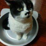 【レビュー】ペットの熱中症対策にひんやりクール猫鍋を買ってみたが