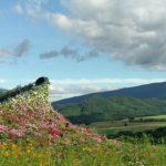 北海道の美しい絶景を楽める「大雪森のガーデン」で花咲く庭園を散歩