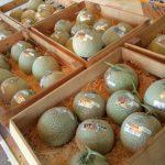 富良野メロンの寺坂農園直売所で評判のメロンを買ったら衝撃的な甘さだった
