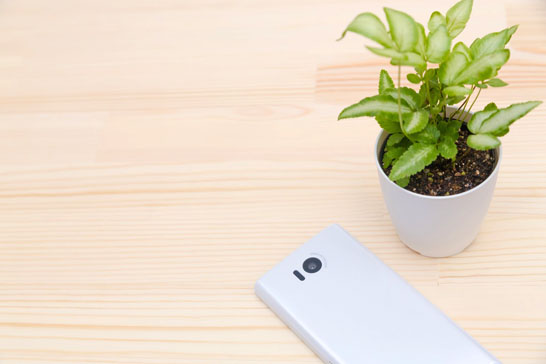 スマートフォンと植物