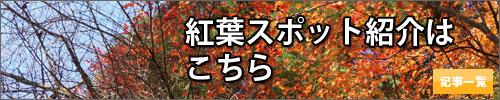 滋賀県の紅葉情報