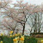 石田三成さんが桜の花見スポットとしておすすめしていた佐和山城跡へ行ってきた【彦根】