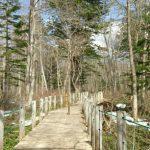 長野県の戸隠森林植物園は野鳥も観察できる森のオアシス