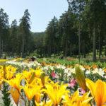 林の中に咲く百合が美しい岐阜県揖斐川町の「谷汲ゆり園」で森林浴をしながら散歩