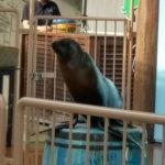 岐阜県の水族館アクア・トトぎふの目玉、アシカショーに子どもも大喜び