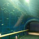 滋賀県の水族館兼博物館!草津市の琵琶湖博物館なら琵琶湖の事がよくわかる