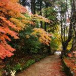 紅葉の美しい参道を行く、滋賀県湖南市の湖南三山「長寿寺」で紅葉散策