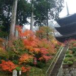 滋賀県の湖南三山「常楽寺」の紅葉散策、赤く彩る荘厳たる国宝三重塔