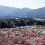 三重県いなべ市梅林公園の梅まつりは東海地方最大級!豪華絢爛な梅の花を鑑賞