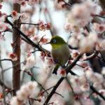 東京モノレールのホームでウグイスやカッコウの鳥の鳴き声が聞こえるのは何故?