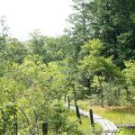 滋賀県にある山室湿原は手軽に行ける湿原散策スポットとしておすすめ